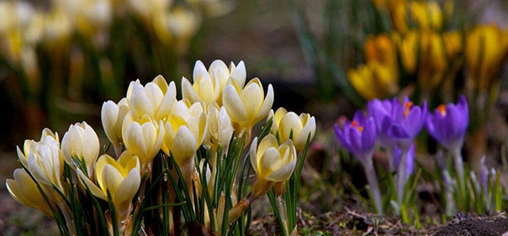 Våren är här - detta kan du göra nu