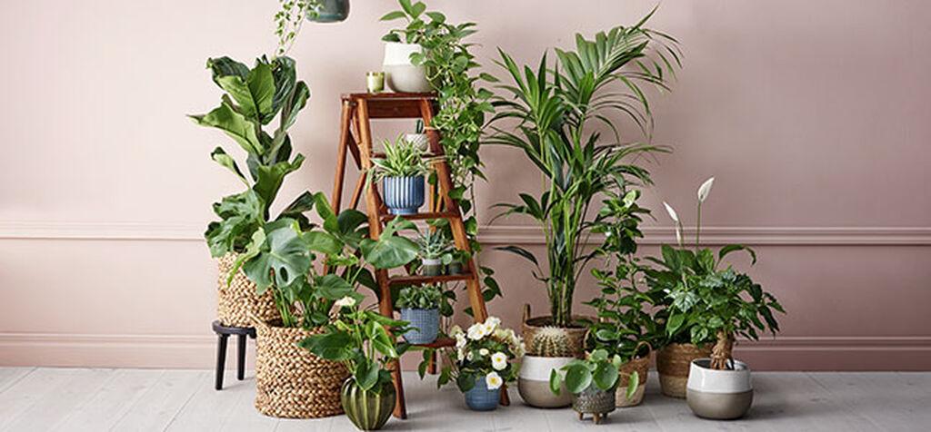 Tio trendigaste krukväxterna 2020