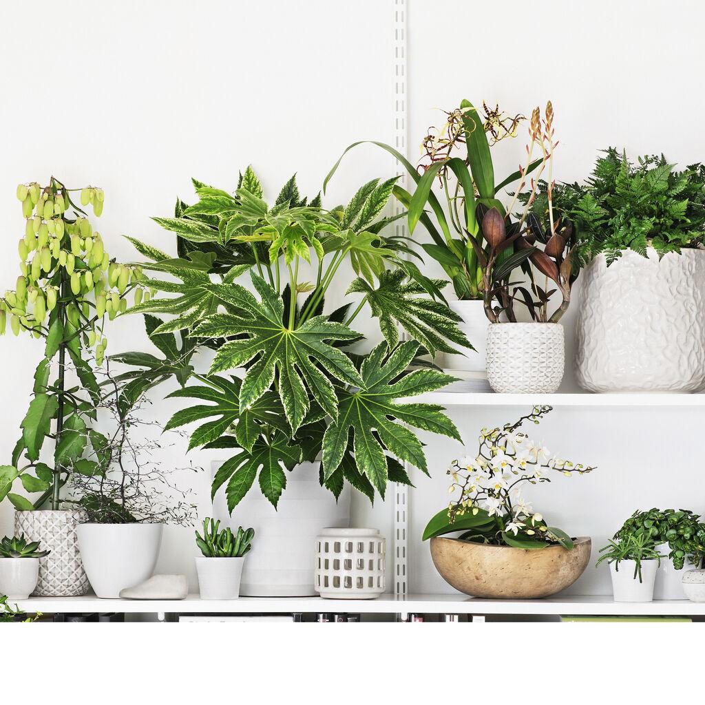 Plantagen 30 år – inneväxter förr och nu