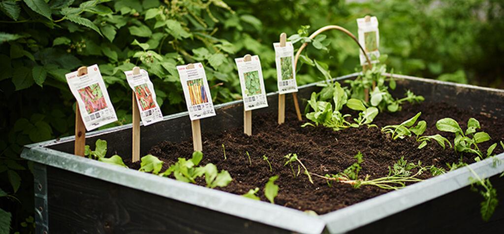 Så grönsaker direkt utomhus - året om