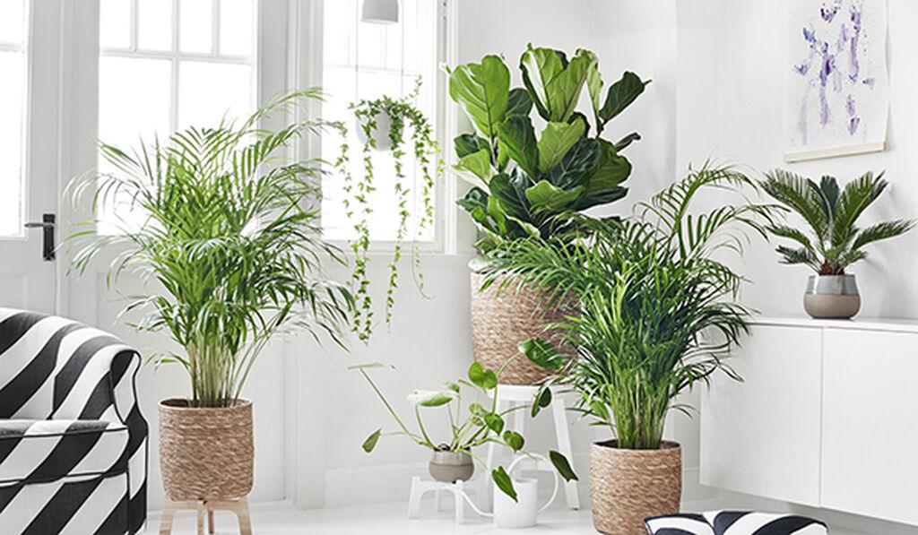 Luftrenande blommande och gröna växter