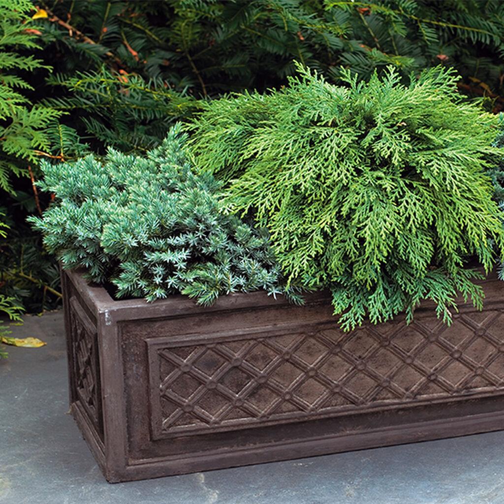 Vintergröna buskar – så lyckas du