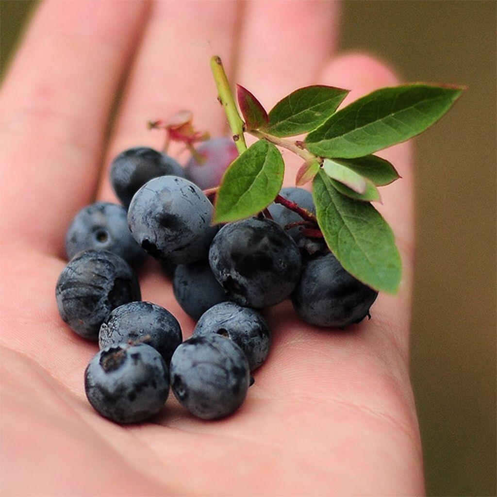 Vitaminrika frukter och bär du kan odla själv