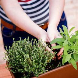 Omplantering – så lyckas du