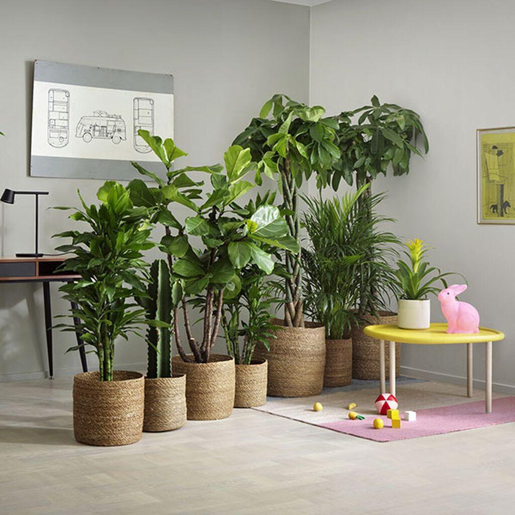 Inred med växter i olika storlekar
