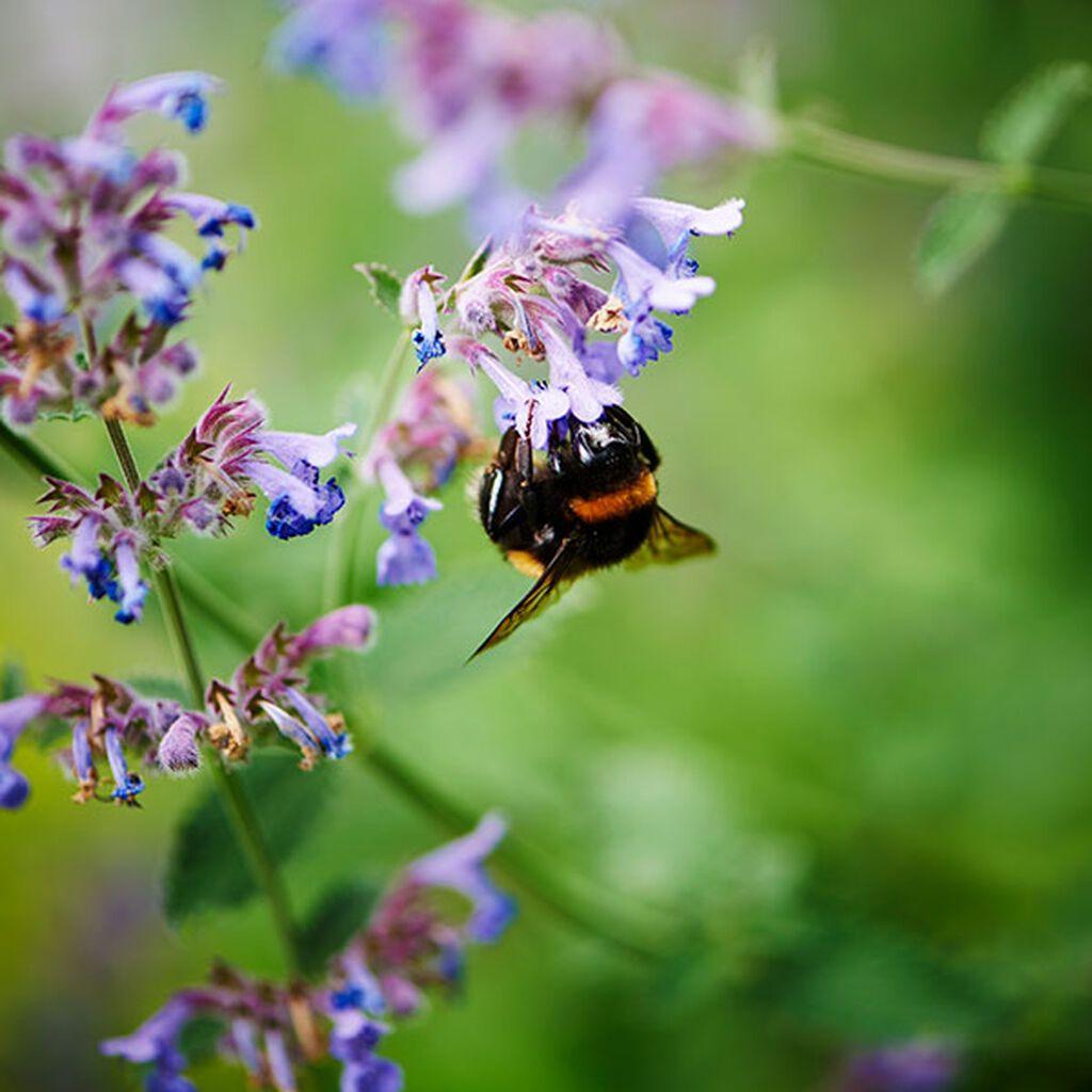 Den lilla trädgården - tips och råd