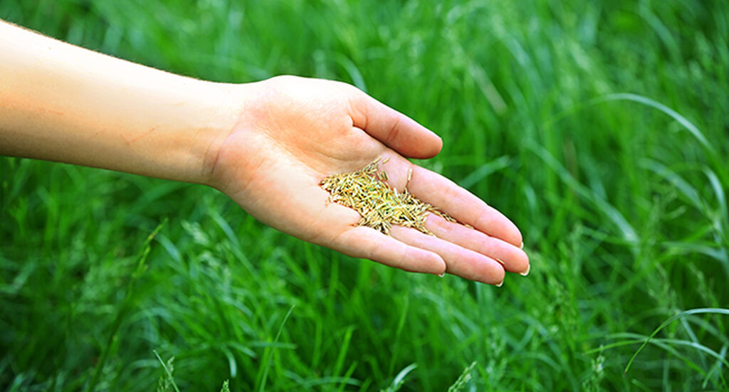 Anlägga gräsmatta – så gör du