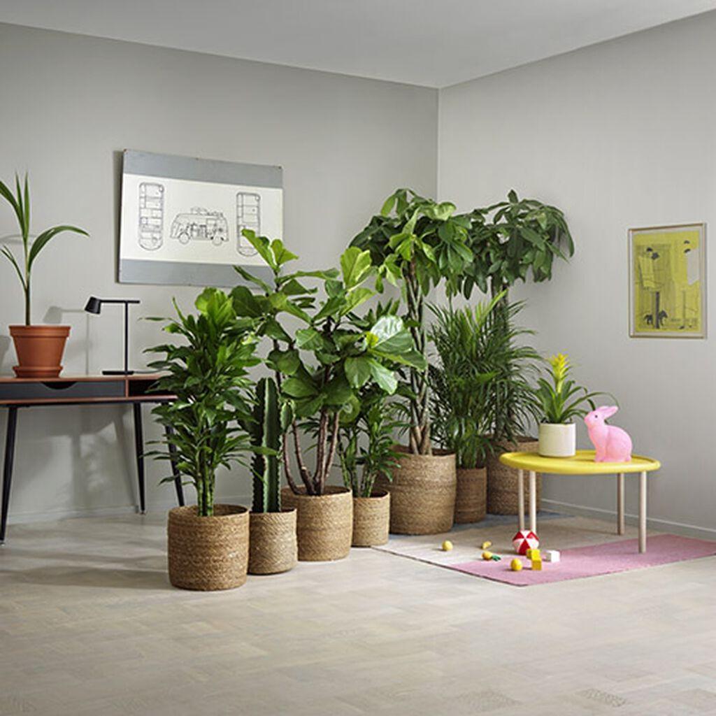 Växter som rumsavdelare