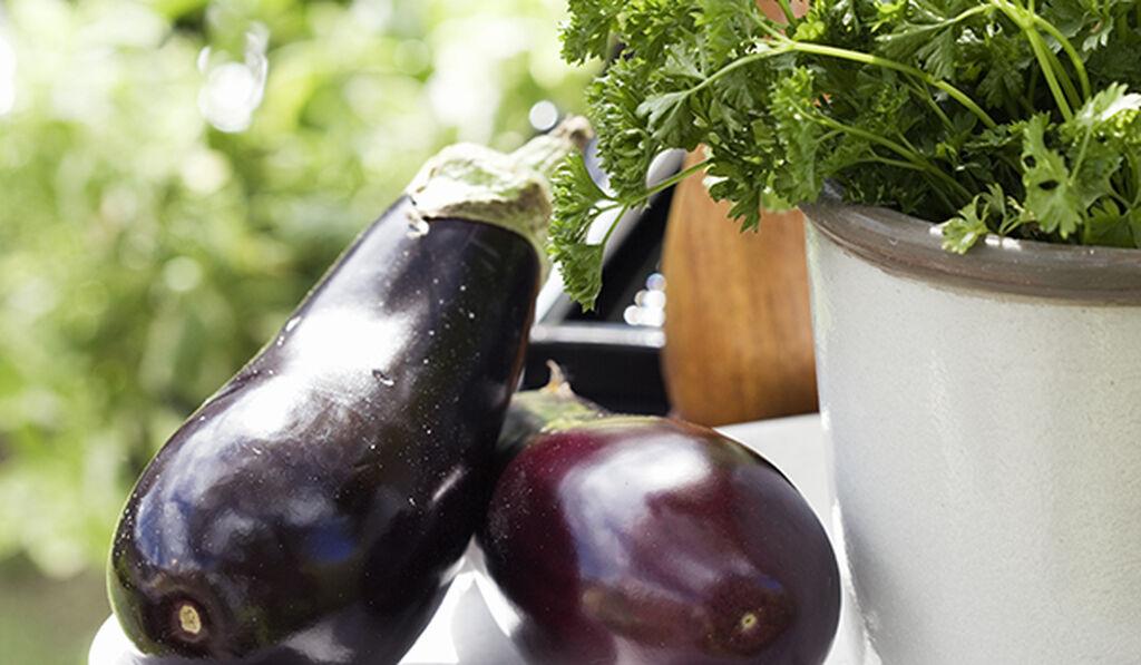 Odla aubergine