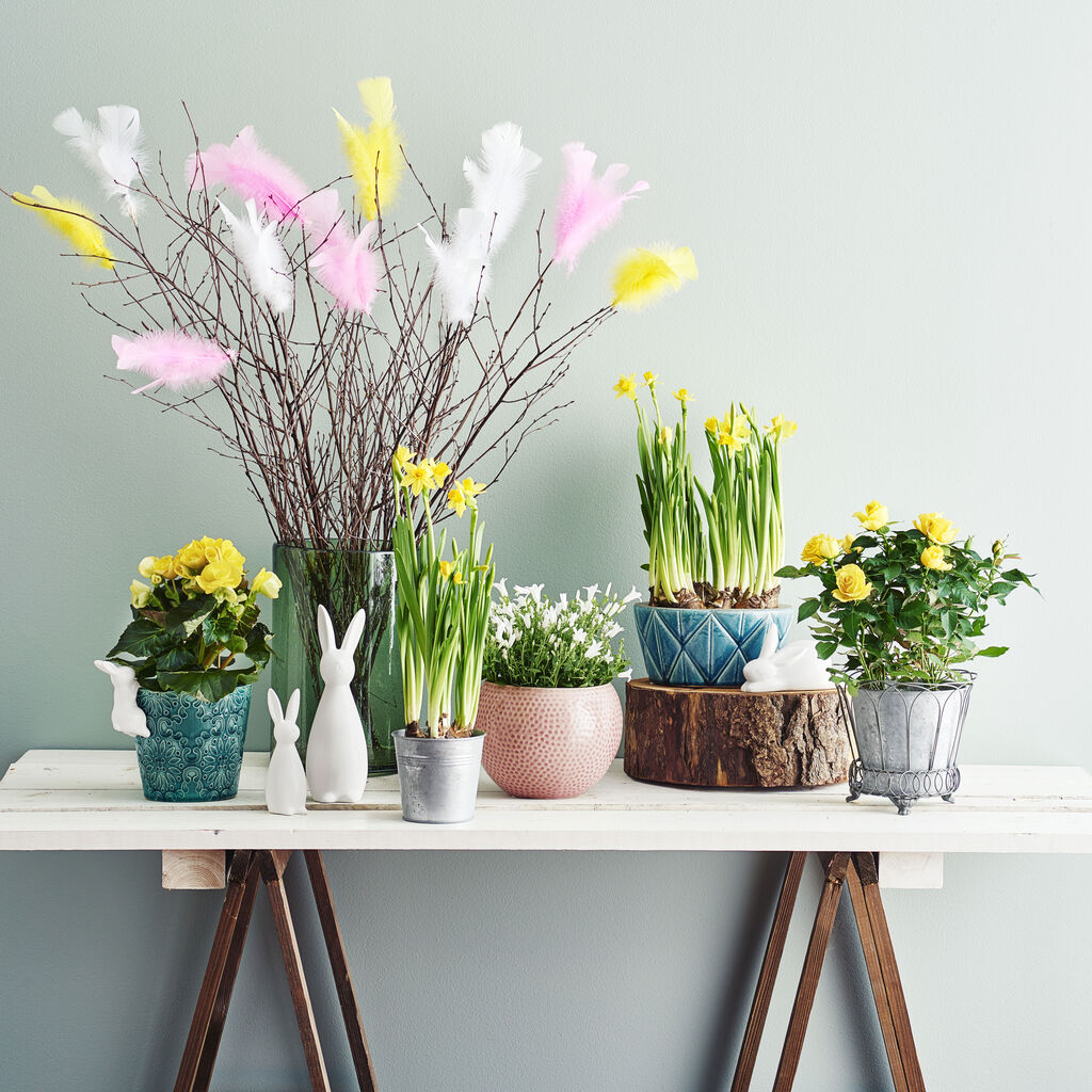 Gör påskfint med färgglada växter