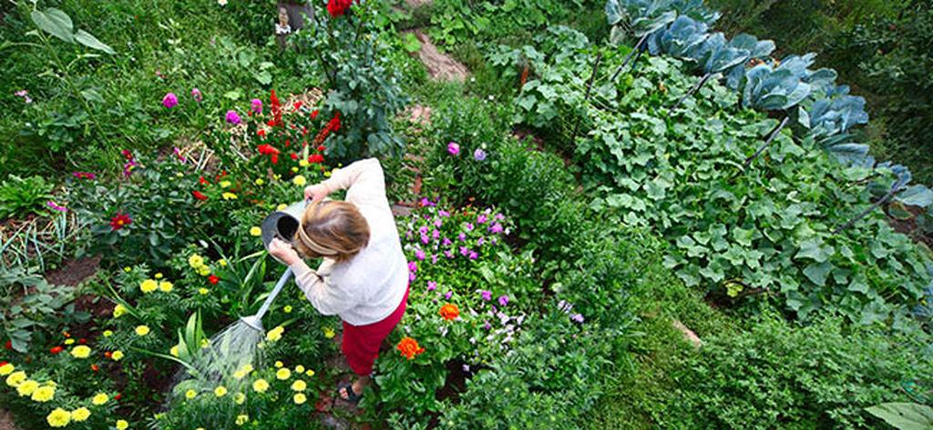 Tips när du ska planera och anlägga trädgård