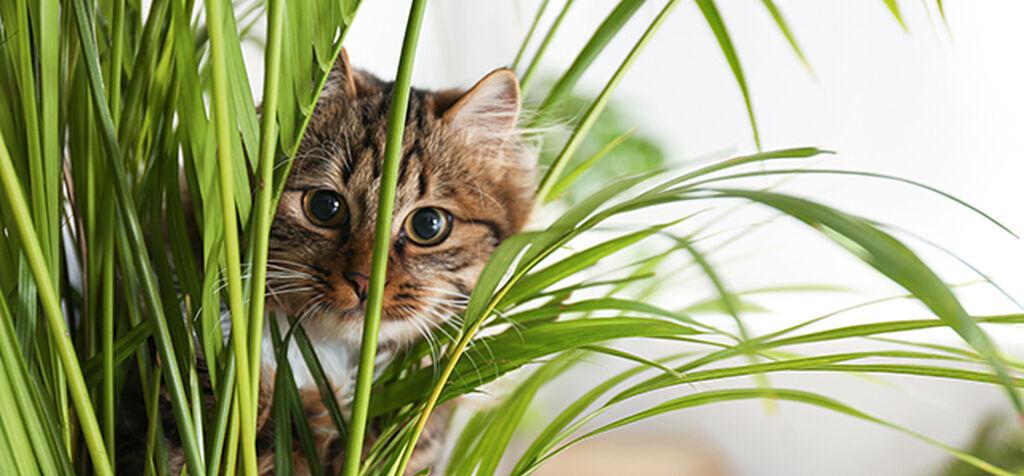 Dessa växter är giftiga för katter och hundar
