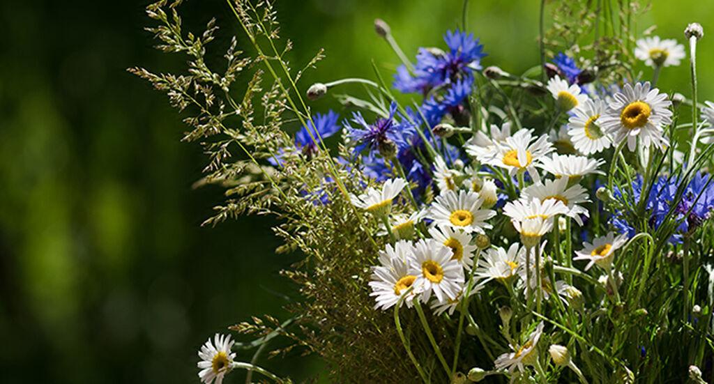 Blommor till din midsommarnattsdröm