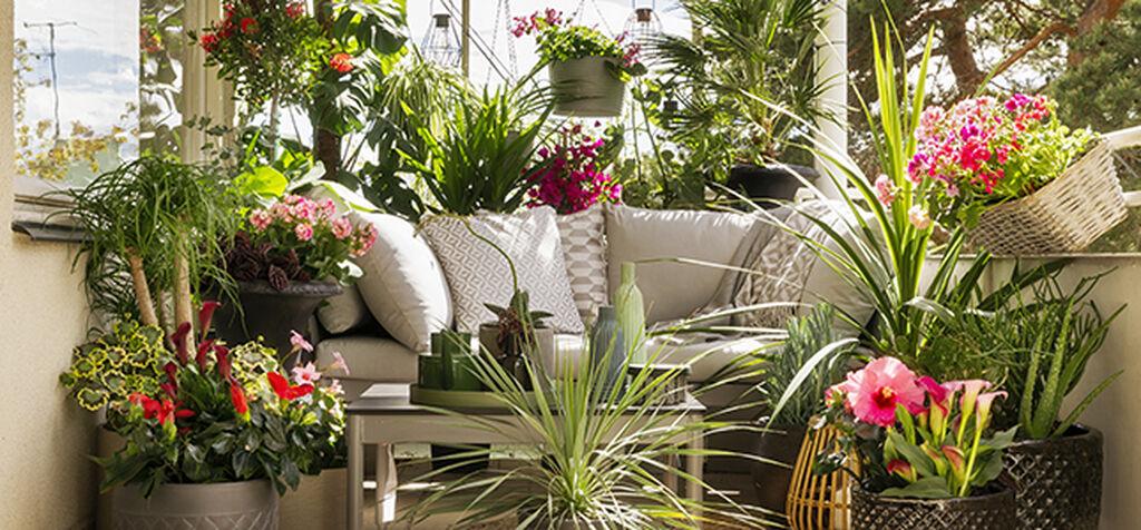 Flytta ut krukväxterna på sommaren