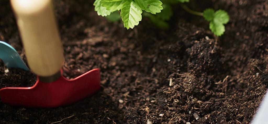 Jordskola – bästa möjliga jord till dina växter