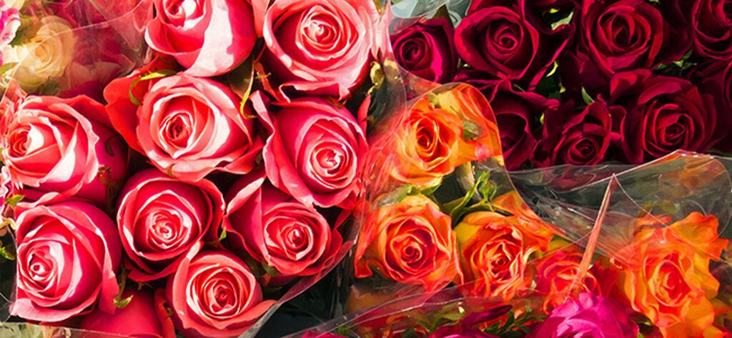 Plantagens rosor – från odlare till butik