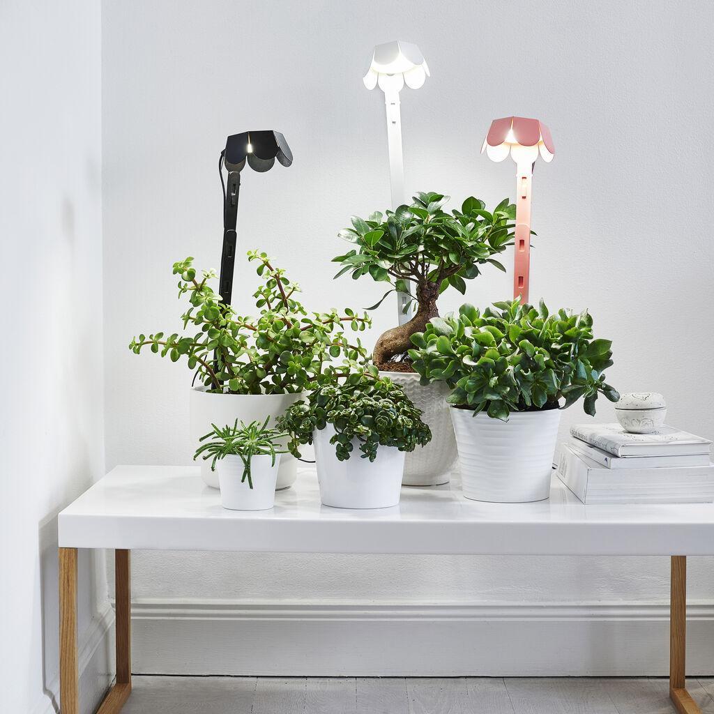 Växtbelysning ger grönska året runt
