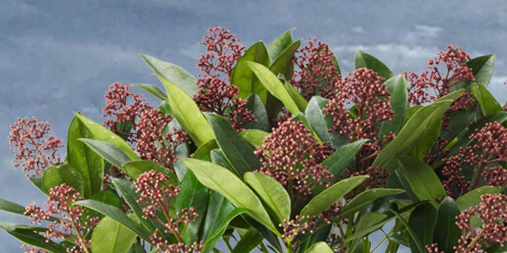 Topp fem, frosttåliga växter