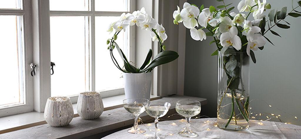 En lyxig orkidé eller fräscha snittblommor till nyårsfesten
