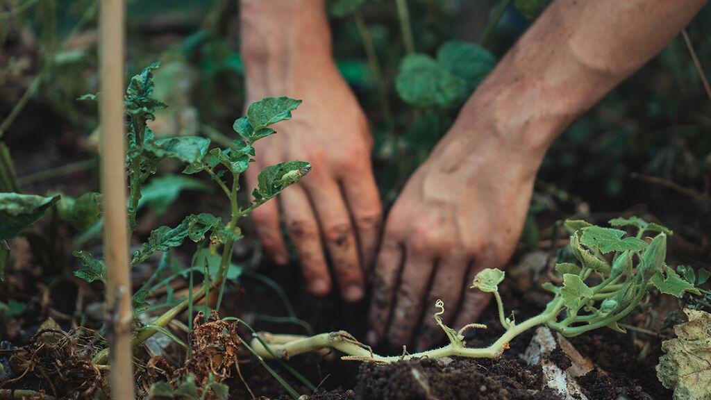 Permakultur – trädgård och odling i samklang med naturen
