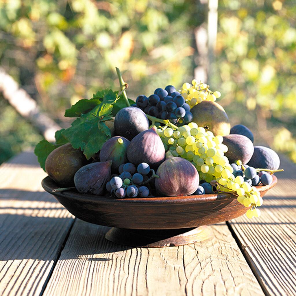 Vindruvor - så lyckas du