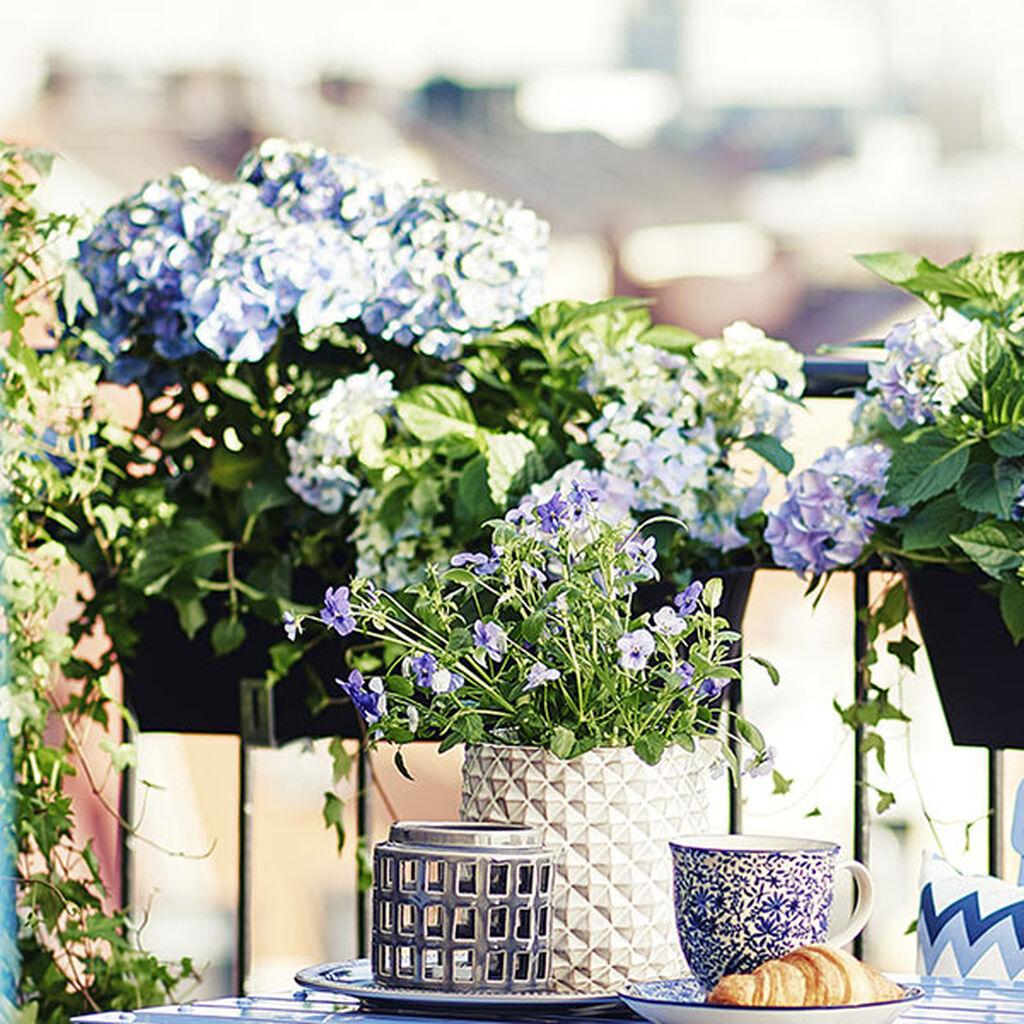 Växter på balkong och terrass