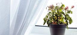 Så får du växterna att överleva semestern