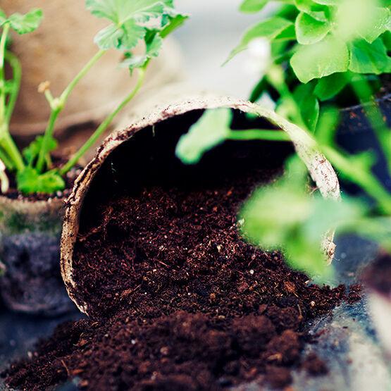 Plantagen ekologisk jord