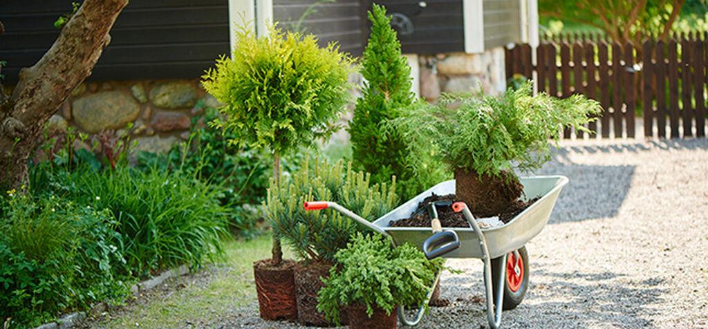Plantera häck – så gör du
