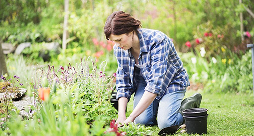 Trädgårdsarbeta för hälsa och rekreation