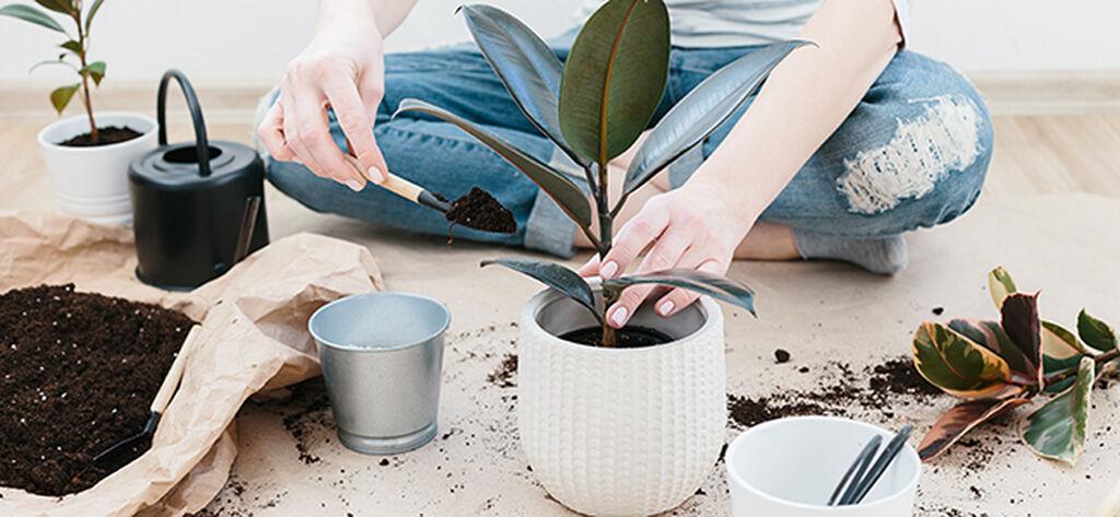 Så lyckas du med en ny växt