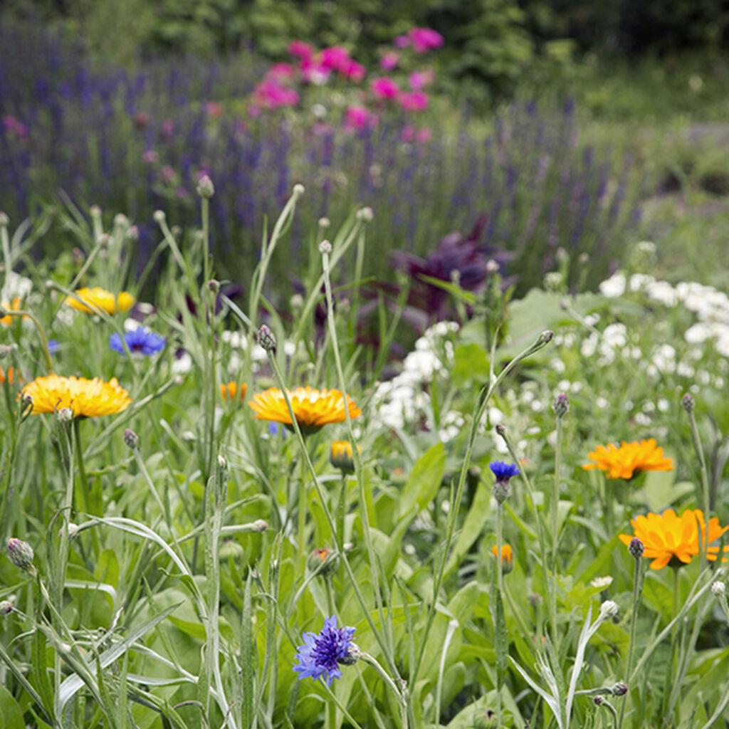 Två färdigkomponerade rabatter för din trädgård