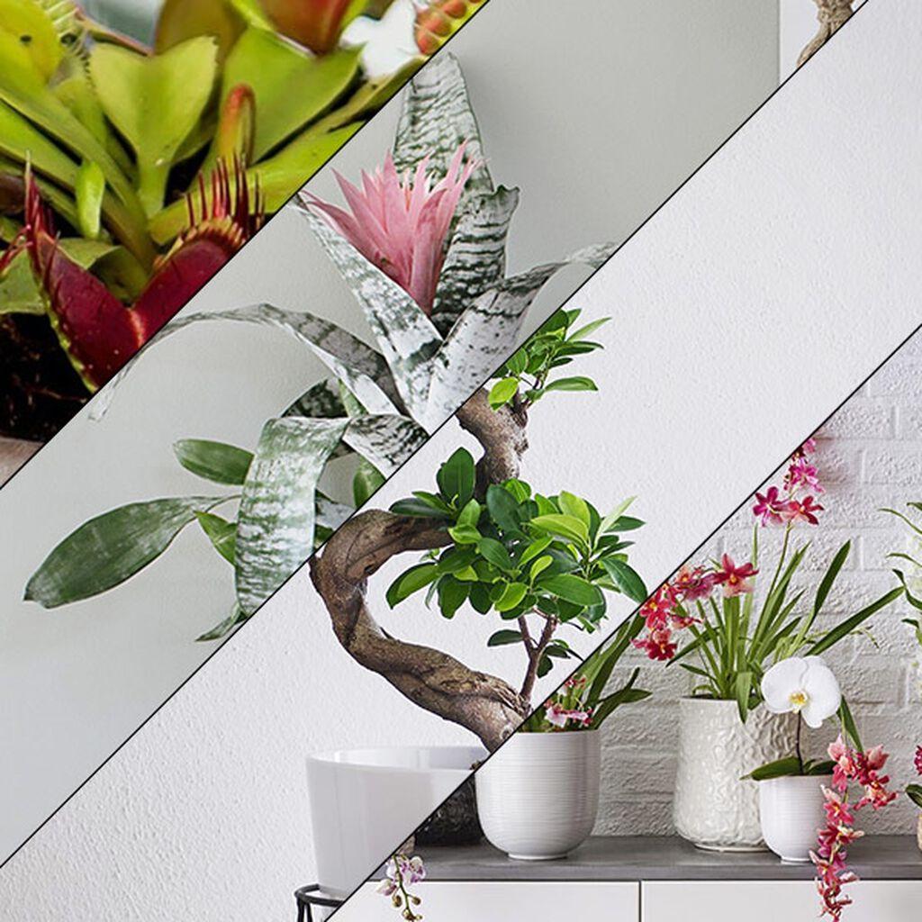 Tio tips på växter som present  f5185f5cca7a0