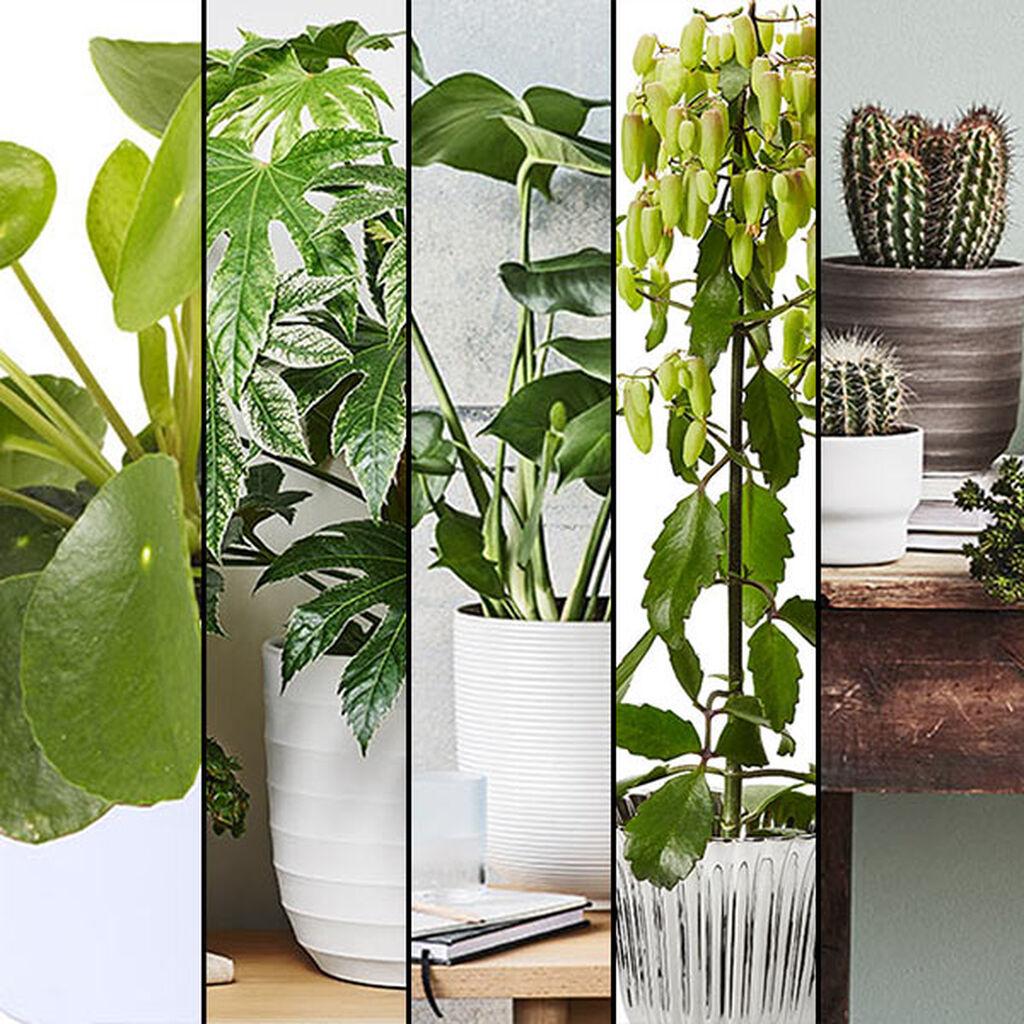 De fem trendigaste krukväxterna 2016