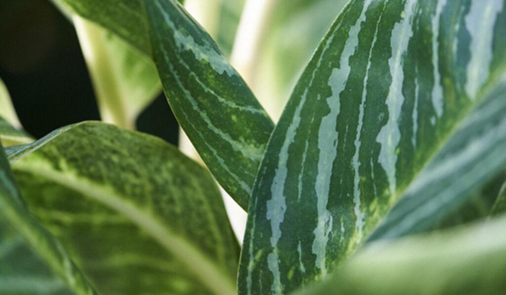 Växter som rensar och renar luften