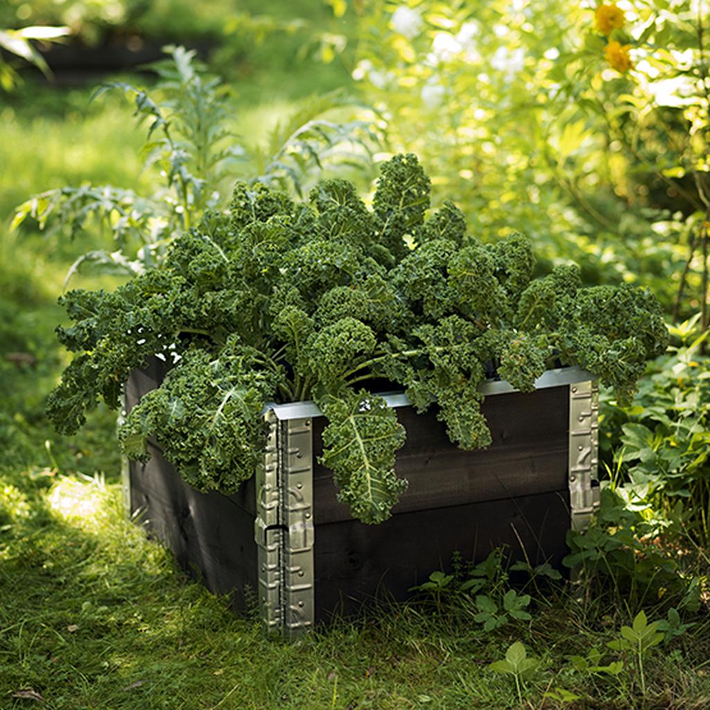 Odla kålväxter