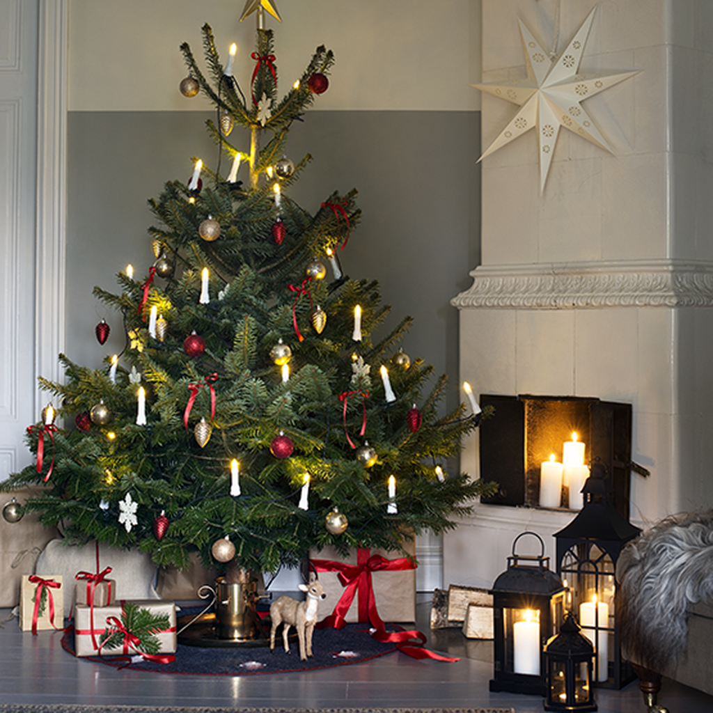 Julgranar för traditionalisten