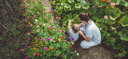 Trädgården är själens viktigaste rum