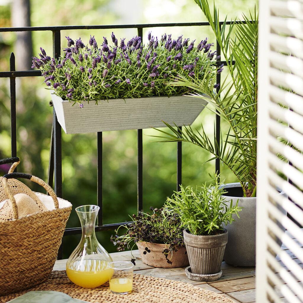 Färdigplanterad balkonglåda ger nya blommor året om