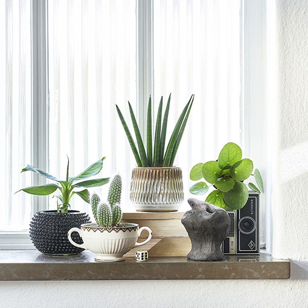 Sju sätt att inreda med miniväxter