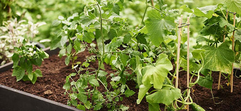 Lyckas med dina ätbara växter