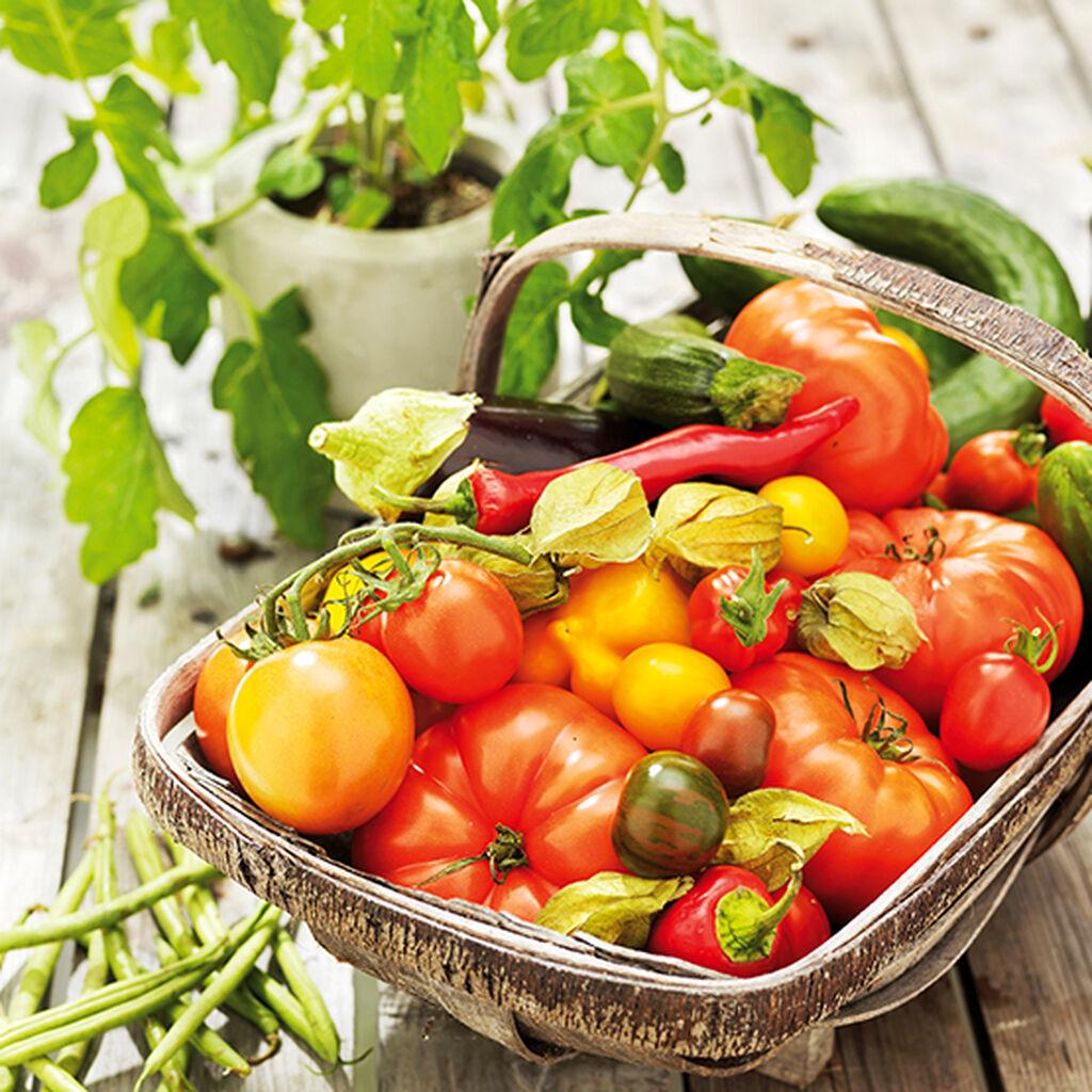 Grönsaksodling - så lyckas du