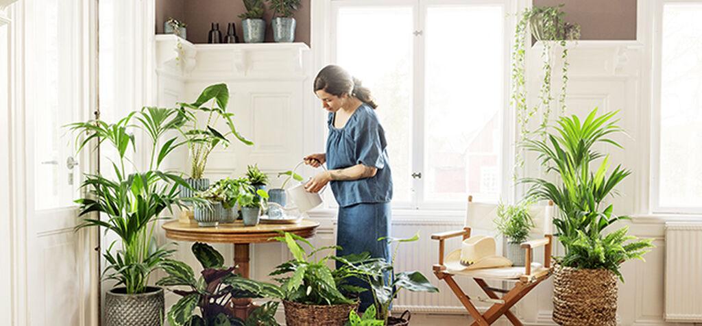 Hitta rätt näring till dina inomhusväxter