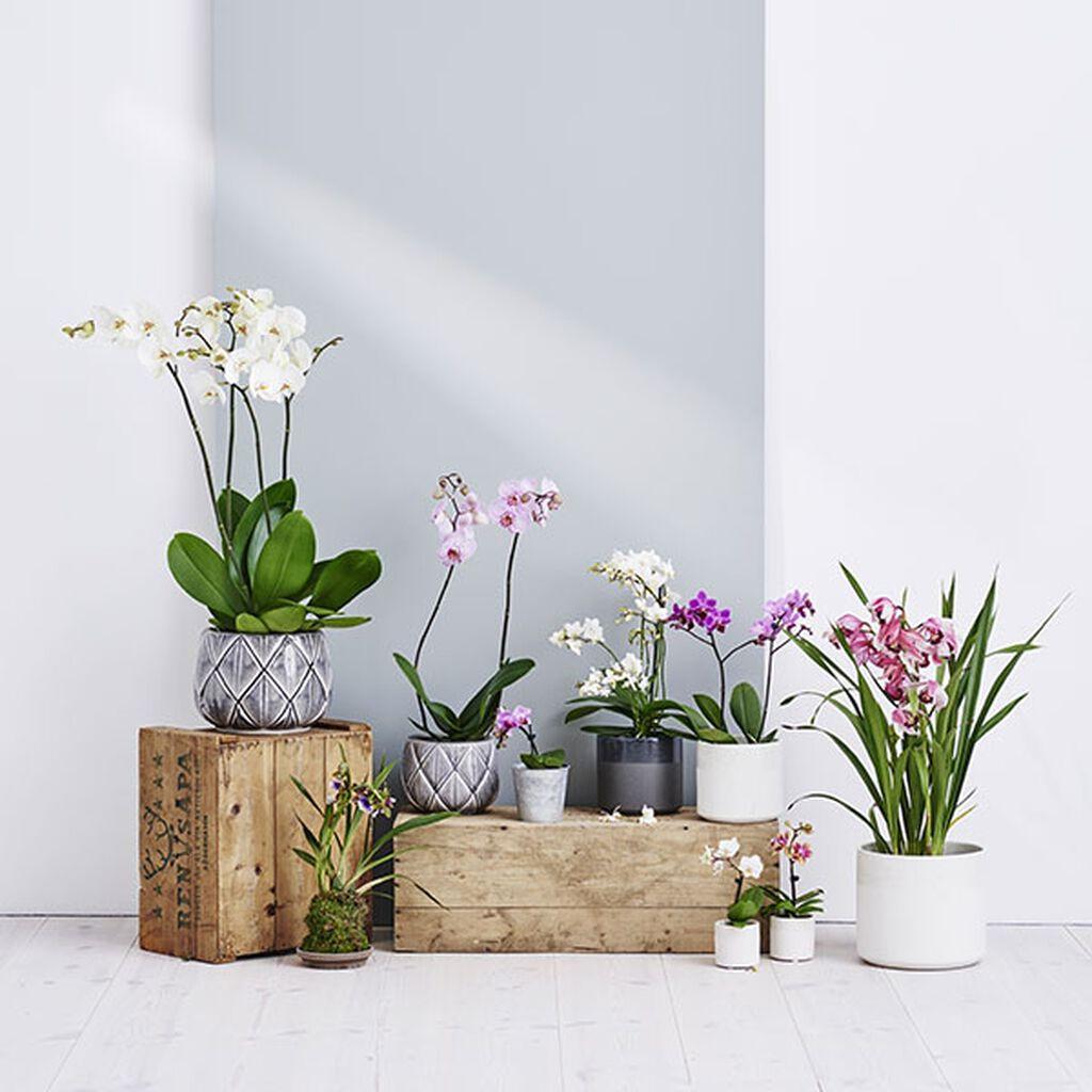 Orkidéer – nya sätt att arrangera dem