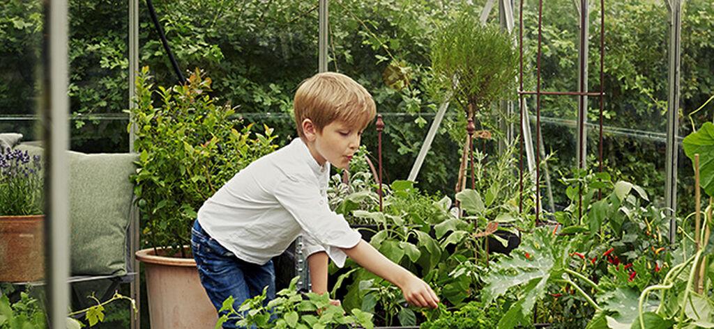 Växthus – allt du behöver veta