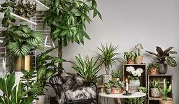 Lättskötta växter
