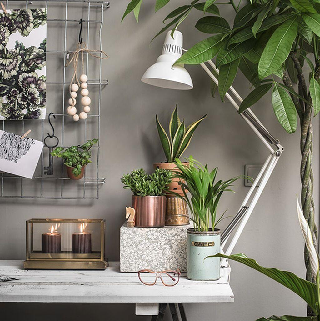 Sju växter som gör din arbetsmiljö produktivare
