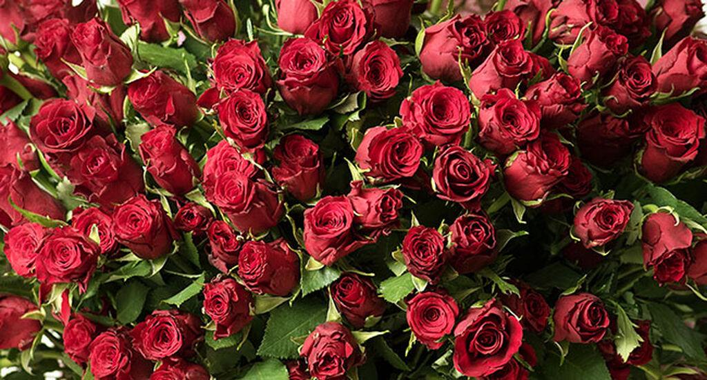 Fairtrade certifierade rosor