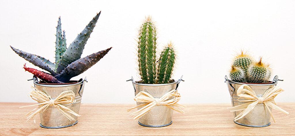 Tio tips på växter som present