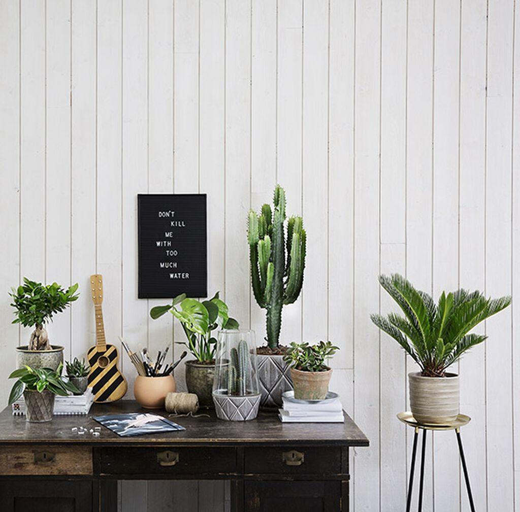 Torktåliga växter för dig som inte vill vattna så ofta